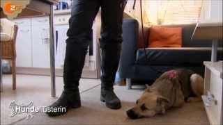 Hundetraining mit der Hundeflüsterin