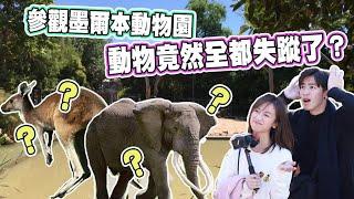 【波仔】參觀墨爾本動物園 🐨🐯🦁🐼動物竟然全都失蹤了?😱