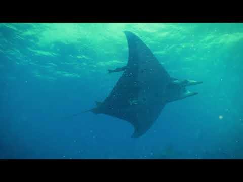 Campanha do Mar - SOSAnimal 2020