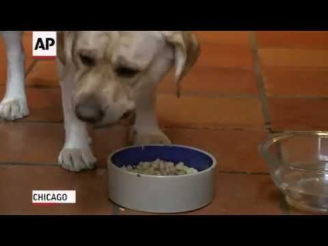 Several companies are recalling dog food over high levels of vitamin D. High levels of the vitamin could cause kidney failure in dogs. (Dec. 4)