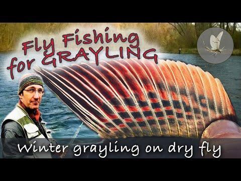 WINTER GRAYLING fishing on DRY FLIES