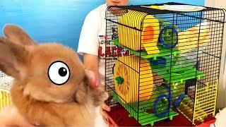Клетка для хомяка. Кролик Баффи и КО. Необычные посылки. Смешная Малышка. без имени. Как мы назовем?