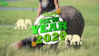 Wishing you a Very Happy New Year 2020 to our entire Wild Elephant Family