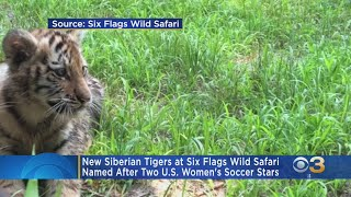 New Siberian Tigers At Six Flags Named After US Women's Soccer Stars