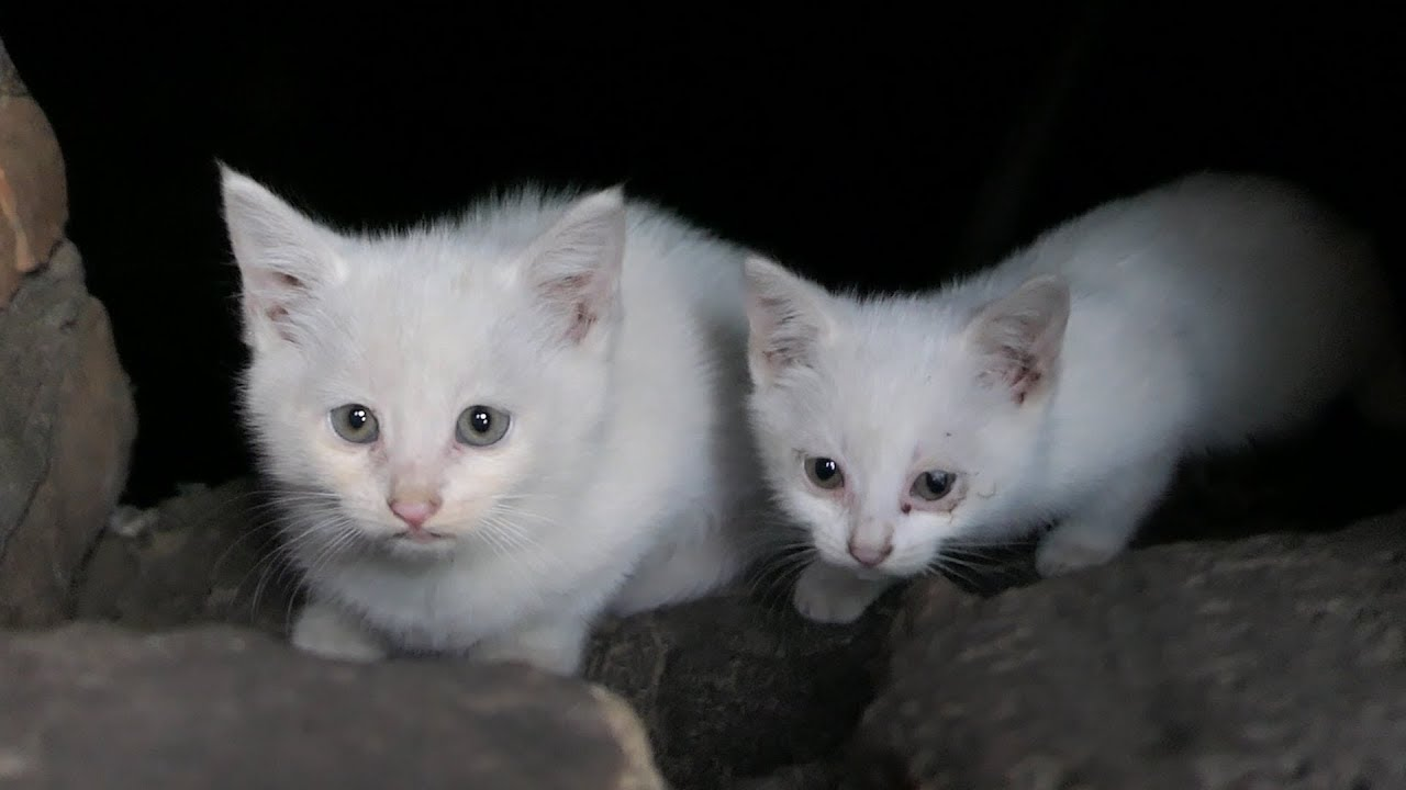 I found white kittens in the basement