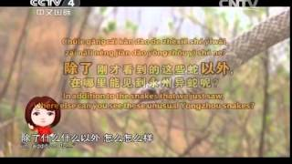20140808 快乐汉语 永州异蛇 语言点:除了……以外……