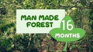 Man Made Forest at Puliyarakonam After Sixteen Months