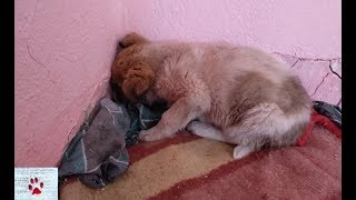 Scared puppy was staring at the wall for days after his rescue, and then...