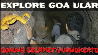 Video SNAKE CAVE IN SLAMET MOUNT DOWNHILL - PURWOKERTO MP3, 3GP, MP4, WEBM, AVI, FLV Agustus 2019