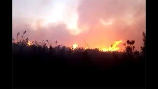 Fire erupts again in Mt Kenya Forest - VIDEO