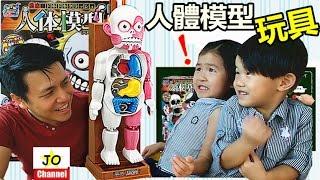 桌面遊戲 人體模型玩具/骷髏玩具 超恐怖!日本校園怪談嚇人遊戲玩具!Human Body Model toys(Board Game)
