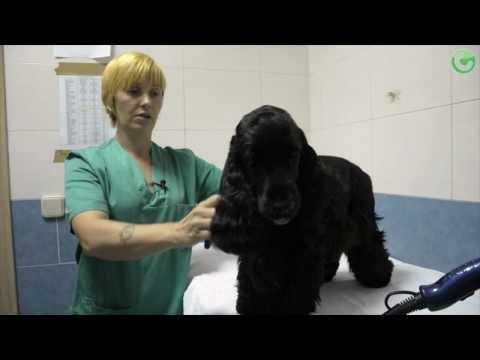 Técnico veterinario de Curso Ayudante Técnico Veterinario con Prácticas en Campus Training