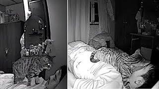Мужчина устанавливает камеру, чтобы увидеть, что делает его кот пока он спит и это весело!