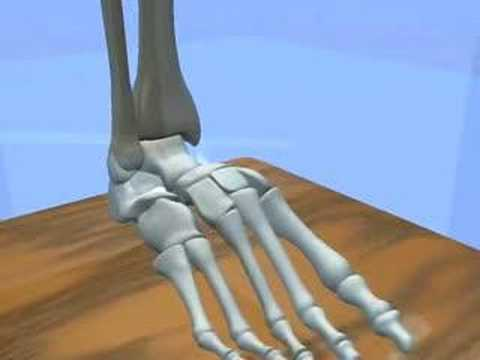 Ankle Internal Rotation