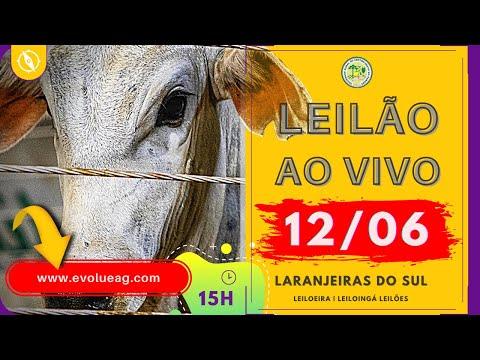 Leilão AO VIVO de Gado em Laranjeiras do Sul - PR