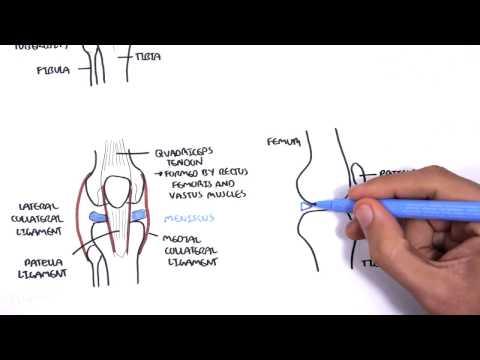 Hirudotherapy w leczeniu przepukliny kręgosłupa