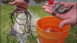 CATCHING WILD MOLLY FISH!!! *FISH STOCKING*