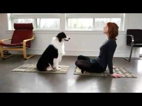 Incredible Yoga Dog - Animal Yoga