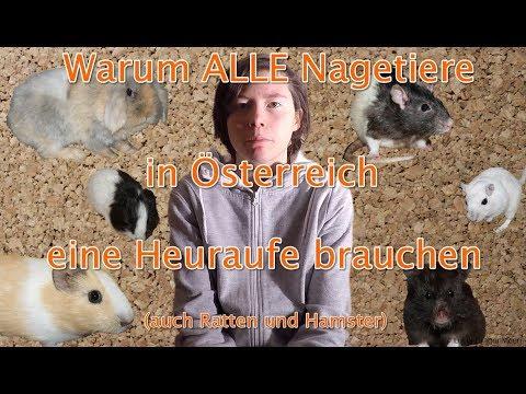 Warum ALLE Nagetiere in Österreich eine Heuraufe brauchen auch Ratten und Hamster