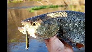 Рыбалка река зуша