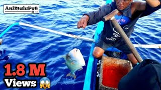 "Surigao ""Palangre Fishing"" Catch GIANT TITAN TRIGGERFISH or ""Papakol"" [Catch and Cook]"