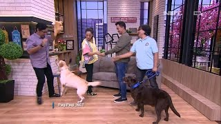 Andre Ketakutan Diajak Main Anjing Labradors