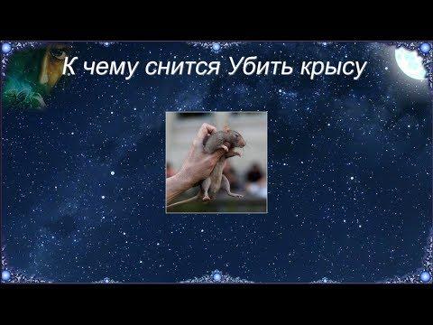 К чему снится Убить крысу (Сонник)