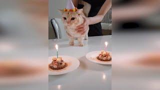 Смешные коты и кошки Октябрь 2019 Новые приколы с котами, коты приколы 2019 funny cats animals #103