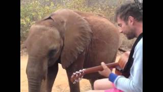 Damon Albarn serenading Mr. Tembo
