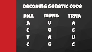 Decode from DNA to mRNA to tRNA to amino acids