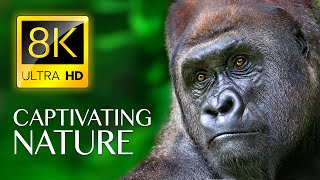 CAPTIVATING NATURE in 8K ULTRA HD - Wildlife Videos with Nature Sounds Relaxing Music