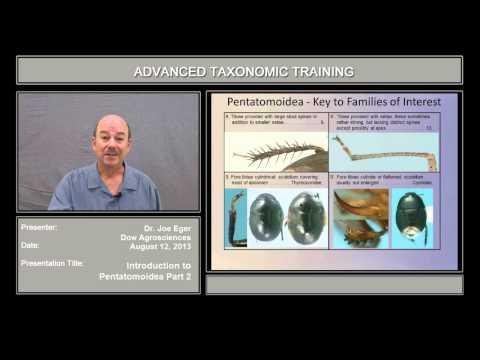 Introduction to Pentatomoidea – part 2