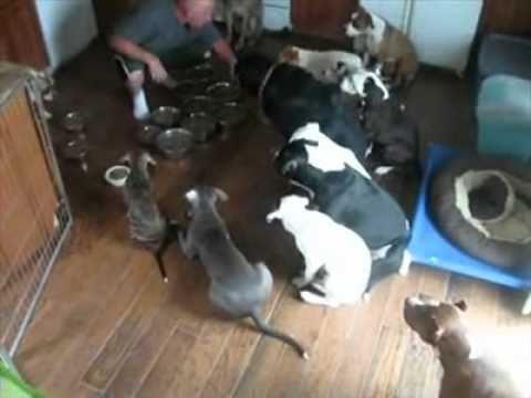 צייתנות מדהימה של כלבים