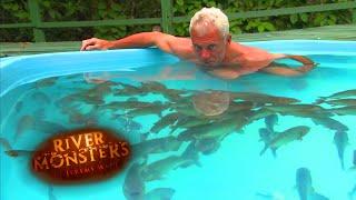 Homem entra em piscina cheia de piranhas