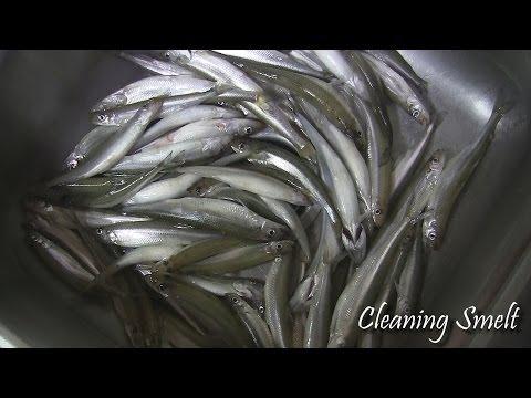 Fishings stagionali