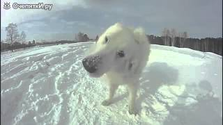 Белая собака на белом снегу
