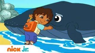 Гоу, Диего, Гоу! | Плюхнись в воду! | Nickelodeon