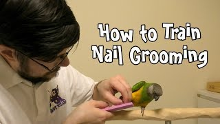 How to Train Parrot Nail Grooming!