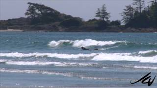 Beauty of a west coast beach at low tide -  YouTube