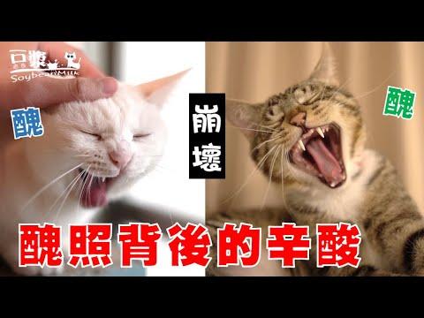 各種貓貓醜照回顧 豆漿