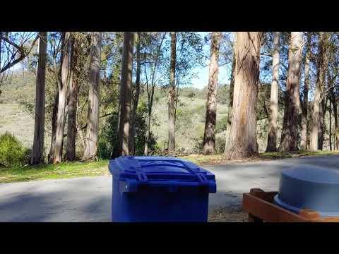 Video Of Anthony Chabot Regional Park, CA