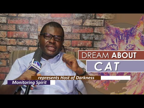 DREAM ABOUT CAT  - Find Out The Biblical Dream Meaning