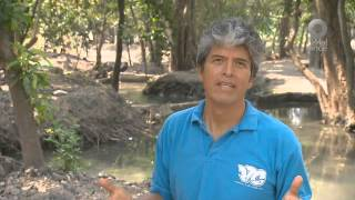 Maestros - Maestro Darinel Domínguez. Chiapas,Tuxtla Gutiérrez