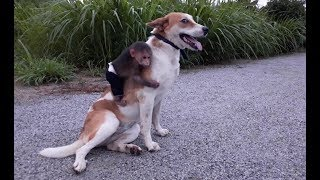 Baby Monkey And Funny Dog - Funny Animals