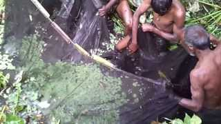 Fishing In Bangladesh Biswanath.  See my Channel for more