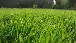 Rasen Düngen und Aerifizieren | Rasenpflege im April 2017