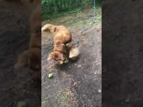 Furry family members welcome!