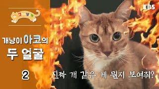 고양이를 부탁해 - 개냥이 아코의 두 얼굴_#002