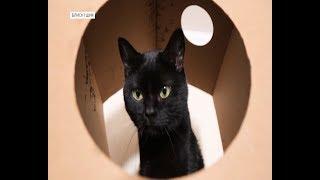 Блиск та Шик: як побороти панування котів у квартирі   Ранок з Україною