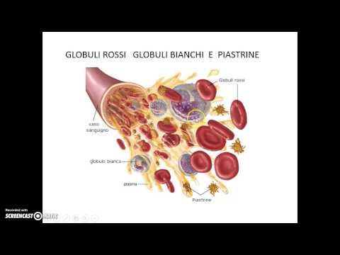 Vobenzy allatto di risposte thrombophlebitis